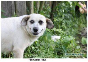 Dog Faking Sick Leave