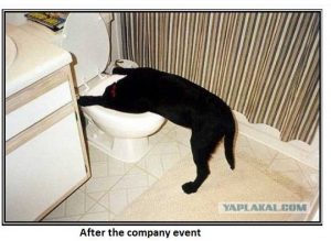 Dog After Company Party