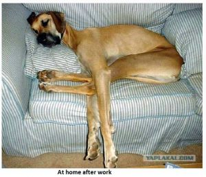 Dog at Home after Work