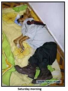 Dog Sleeping off Party