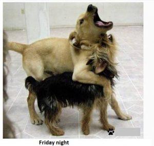Doggies Partying Friday Night