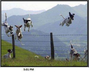 Dogs Celebrating After Work