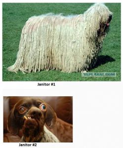 Janitor Dogs