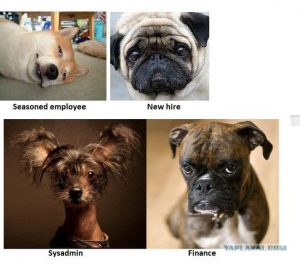 Seasoned Dog Employees