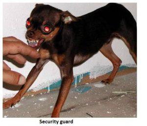 Security Guard Dog