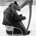 Bear Playing Harp in the Snow